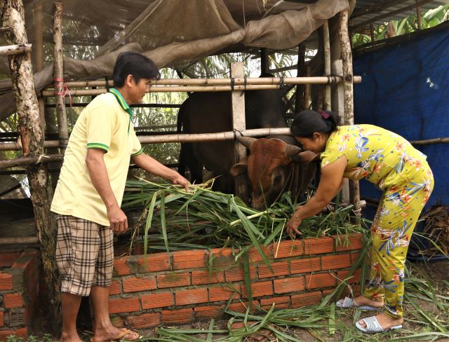 Sóc Trăng Nhiều hộ Khmer vượt khó vươn lên thoát nghèo