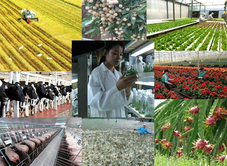 Phát triển nông nghiệp ứng dụng công nghệ cao