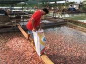 Vĩnh Long Giá trị thu hoạch ngành thủy sản đạt trên 1,3 tỷ đồng ha năm