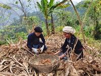 Chỉ số cam kết giảm bất bình đẳng của Việt Nam 2020 có tiến bộ