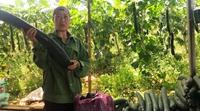 Nhân rộng tiêu chuẩn VietFarm trong sản xuất nông nghiệp