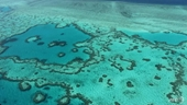 Một nửa rạn san hô lớn nhất thế giới chết do biến đổi khí hậu