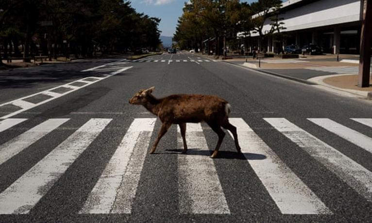 Sáng kiến mới bảo vệ động vật ở Nhật Bản