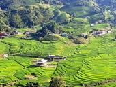 Thung lũng Tả Van trong sắc xanh của lúa