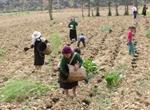 Hoàn thiện Tờ trình đề xuất chủ trương đầu tư Chương trình mục tiêu quốc gia giảm nghèo