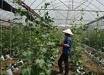 Khoa học công nghệ - đòn bẩy trong phát triển nông nghiệp