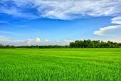 Sóc Trăng Chuyển 21,35 ha đất trồng lúa sang đất phi nông nghiệp