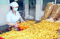 Đồng Nai Đẩy mạnh phát triển ngành chế biến nông sản xuất khẩu