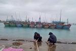 Hỗ trợ gần 600 ngư dân tránh, trú bão số 14