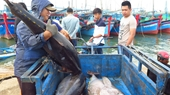 Phú Yên Thi đua phát triển kinh tế