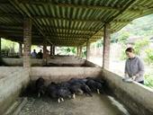 Tín dụng chính sách xã hội thúc đẩy xây dựng nông thôn mới tại các địa phương