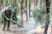 Khống chế và dập tắt đám cháy trên 4ha rừng thông