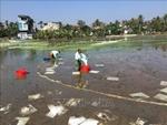Danh mục chất phân tán được sử dụng trong vùng biển Việt Nam