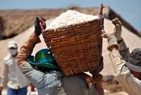 Xuất cấp 815 tấn muối hỗ trợ tỉnh Quảng Bình