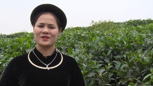 Người dân đất chè Thái Nguyên gửi gắm tâm tư, kỳ vọng đến Đại hội