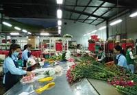 Ngành Nông nghiệp quyết tâm vượt qua khó khăn, vươn lên trong năm mới