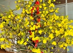 TP Hồ Chí Minh Trăm hoa xuân khoe sắc