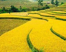 Hướng phát triển của du lịch bền vững