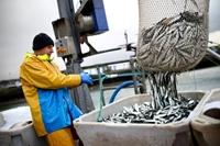 Anh tăng cường hỗ trợ các doanh nghiệp đánh bắt cá