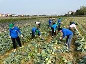 Hải Dương Chung tay hỗ trợ tiêu thụ nông sản cho nông dân
