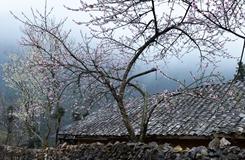 Sắc xuân trên cao nguyên đá Đồng Văn