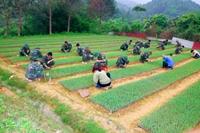 Ban hành Nghị định về Khu kinh tế - quốc phòng