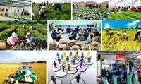 Ban hành Nghị định về thành lập Quỹ hỗ trợ phát triển hợp tác xã  