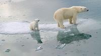 Nguy cơ tuyệt chủng các loài do biến đổi khí hậu