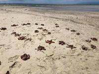 Đừng vô tâm với môi trường biển