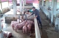 Giảm 50 mức thu phí trong chăn nuôi kể từ ngày 17 5