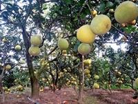 Đồng Nai phân vùng, diện tích sản xuất nông nghiệp hữu cơ đến năm 2030