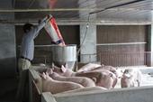 Chủ động nguồn nguyên liệu chế biến thức ăn chăn nuôi