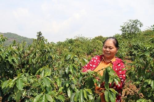 Xây dựng Sơn La trở thành trung tâm chế biến nông sản của vùng Tây Bắc