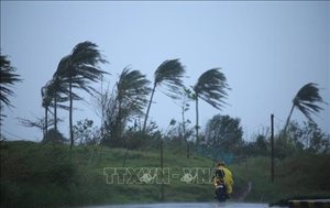 Gió mạnh kèm mưa lớn phá hủy hàng trăm ngôi nhà tại Campuchia
