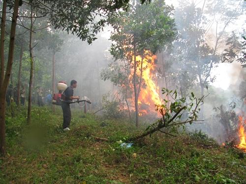Phòng chống cháy rừng Những việc cấp bách cần làm ngay