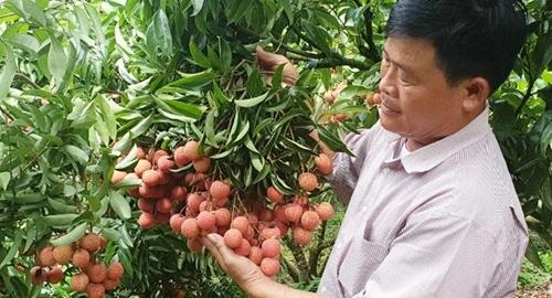 Thương mại điện tử Hướng đi mới cho tiêu thụ nông sản