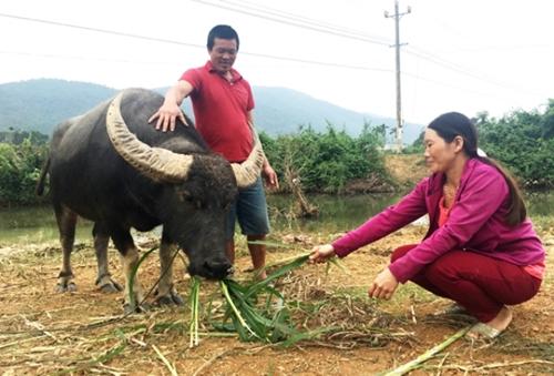 Phụ nữ huyện Bố Trạch Quảng Bình sử dụng vốn vay hiệu quả