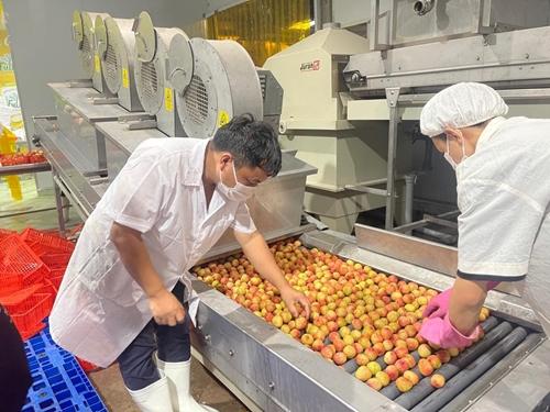"""Để nông sản Việt """"hữu xạ tự nhiên hương"""""""