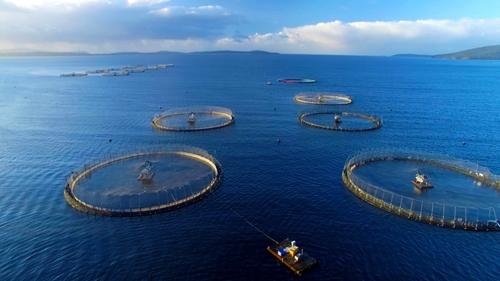 Phát triển nghề nuôi biển theo hướng công nghiệp hiện đại