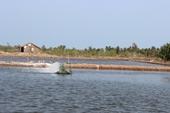 Bảo vệ thủy sản nuôi trong điều kiện thời tiết nắng nóng