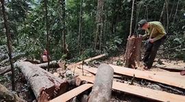 Phát hiện vụ phá rừng nghiêm trọng tại Gia Lai