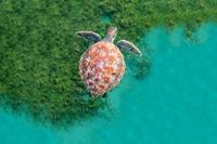 Nguồn sống của hơn 3 tỷ người là từ đại dương