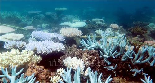 Lan tỏa thông điệp ý nghĩa của đại dương đối với con người và các sinh vật trên trái đất
