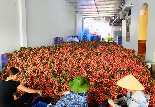 Xuất khẩu rau quả đạt 1,77 tỷ USD trong 5 tháng đầu năm