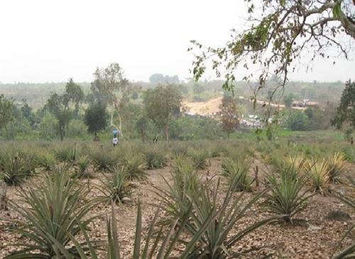 Sa mạc hóa – vấn đề mang tính toàn cầu