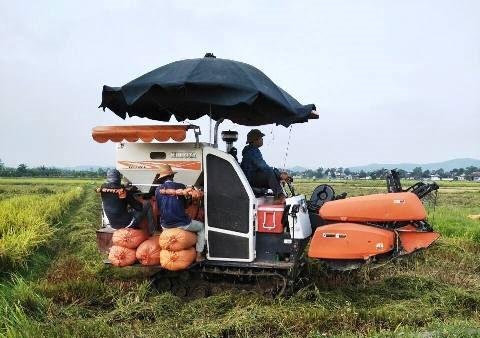 Ngành nông nghiệp nỗ lực vượt khó