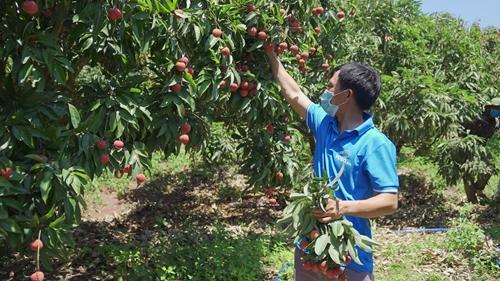Xuất khẩu nông sản bằng nền tảng thương mại điện tử
