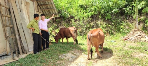 Sức bật mới miền sơn cước Tân Sơn, Phú Thọ