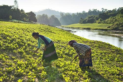 Giá lương thực tăng cao ảnh hưởng tới hàng triệu gia đình trên thế giới