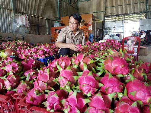 """TP Tân An Long An  Nâng tầm nông sản qua Chương trình """"Mỗi xã một sản phẩm"""""""